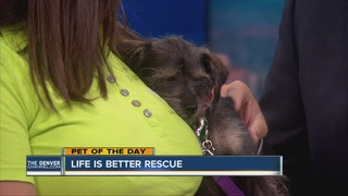 Pet of the day for August 14th