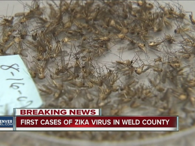 First cases of Zika virus in Weld County