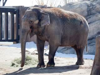 Denver Zoo elephant put on 'Hospice' care