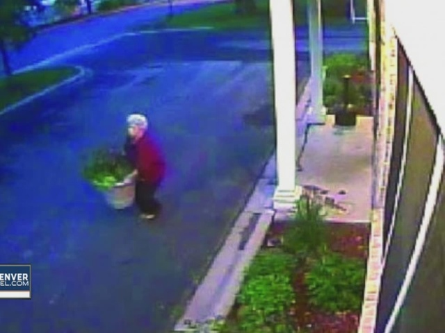 Flower pots targeted by thieves in Denver