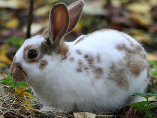 Rabbits invade Greeley neighborhood