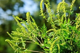 When To Take Allergy Medicine