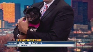 Pet of the day for August 27th