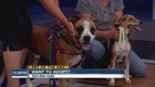 Pet of the day for August 28th