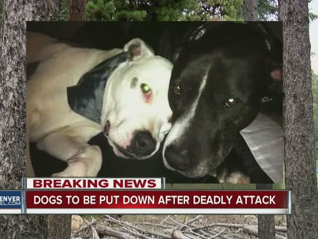 Both dogs behind fatal dog attack euthanized