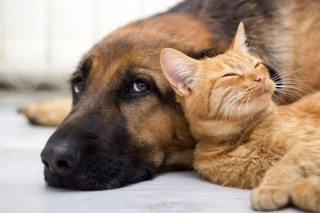 Love Your Pet, but Have Trouble Breathing?