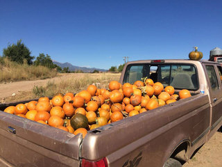 Hail wipes out farm's pumpkin crop