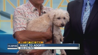 Pet of the day for September 4th