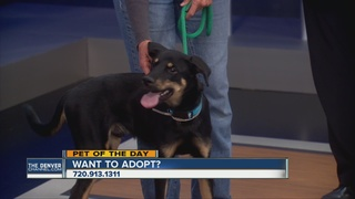 Pet of the day for September 10th