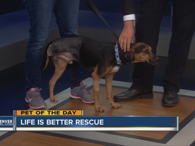 Pet Of The Day For September 11 Baldwin The Dog