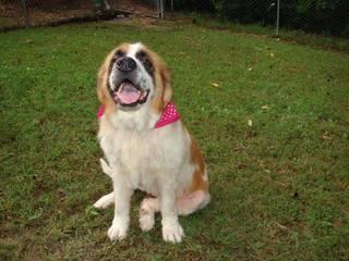 Colorado dog stolen 5 years ago, found in Mo.