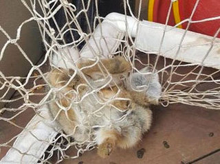 Bunny rescued from child's hockey net