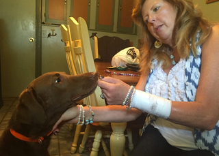 Dog stabs Colorado woman with knife