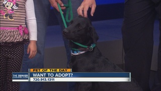 Pet of the day for September 24th