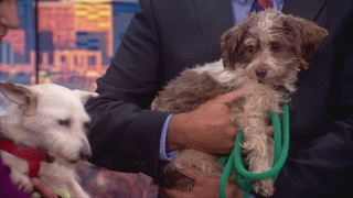 Pet of the day for September 25th