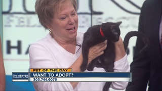 Pet of the day for October 1