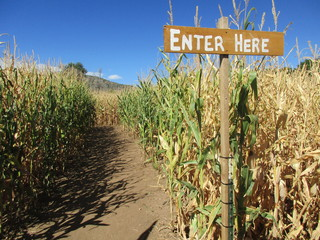 7 fun Colorado corn mazes to explore