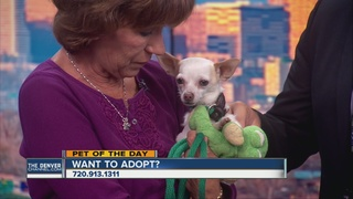 Pet of the day for October 8th