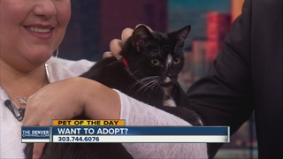 Pet of the day for October 15th