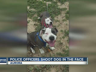 Aurora police officers shoot loose dog in Aurora