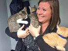 Uber offers kitten snuggles on Friday