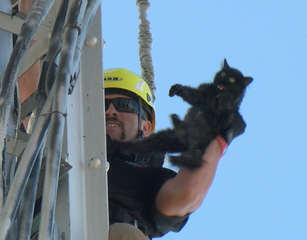 Cat rescued from water tower soon to be adopted