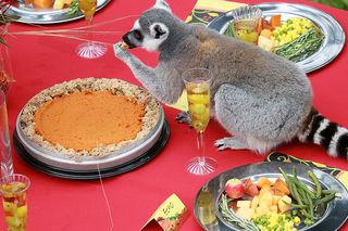 Some Thanksgiving food hazardous to pets