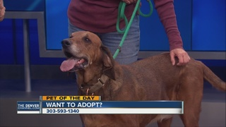 Local animal shelter up for a big grant