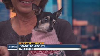 Pet of the day for December 3 - Sarafina
