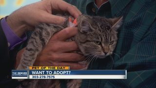 Pet of the day for December 4