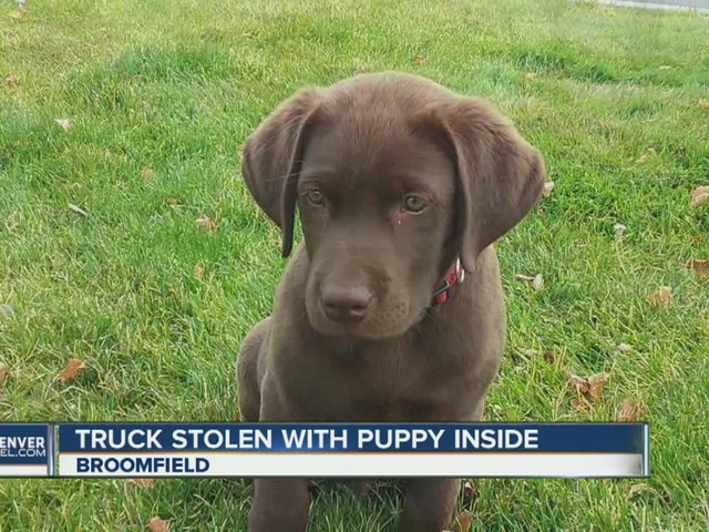 Stolen truck, puppy prompt police hunt