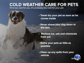 Caring for pets in frigid cold weather