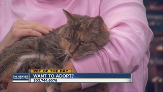 Pet of the day for December 10 - Ting the cat