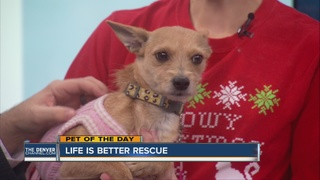 Pet of the day for December 11th