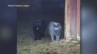 Working cats program finds homes for feral cats