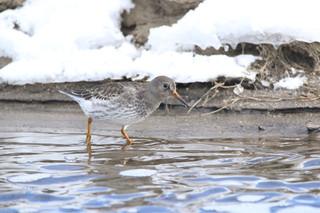 Teenage twins spot rare bird in Colorado
