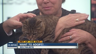 Pet of the day for December 24th