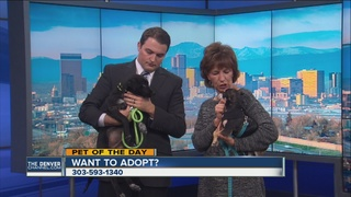 Pet of the day for December 31st