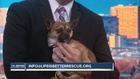 Pet of the day for January 8th