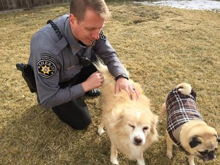 Officer adopts blind blue heeler after eviction