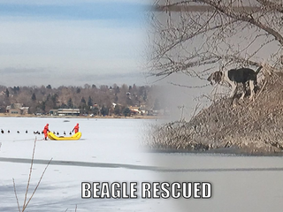 Firefighters embark upon ice rescue for beagle
