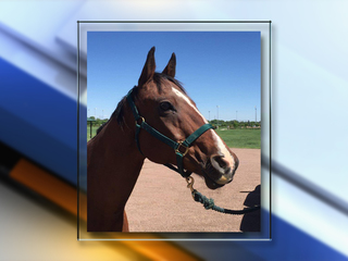 Parker Police Department horse put down
