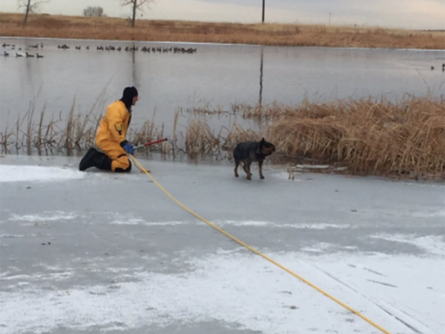 Rescuers save dogs who fell into icy lakes