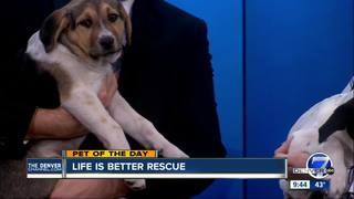 Pet of the day for January 29 - 2 adorable pups