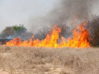 Nearly 500 acres burn in Elbert County blaze