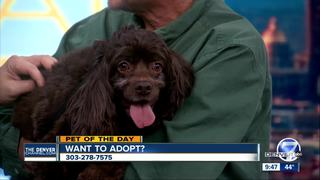Pet of the Day for February 5 - Marly