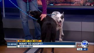 Pet of the day for February 11 - 2 cute dogs