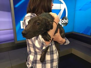 Pet of the day for February 12 - Ziggy