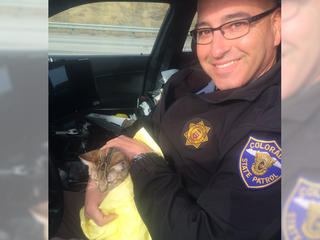 Troopers rescue kitty stuck on I-25 median