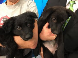 Pet of the Day for Feb. 26 - 2 adorable puppies